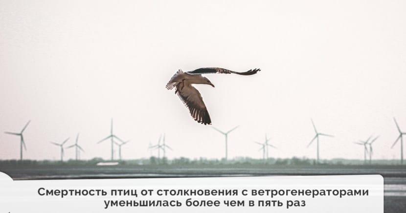 Смертность птиц от столкновения с ветрогенераторами уменьшилась более чем в пять раз